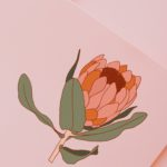 Protea Flower Illustration